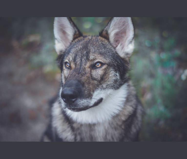 Photo of Nox, a