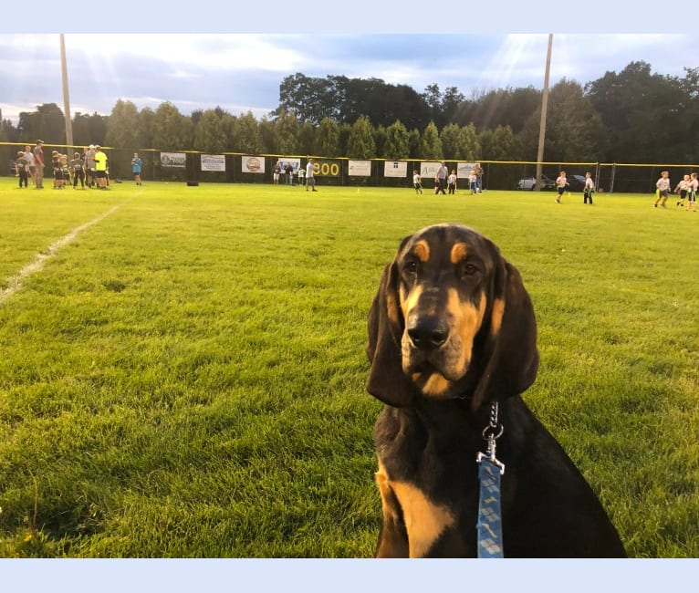 Photo of Guinness, a Bloodhound  in Mississippi, USA