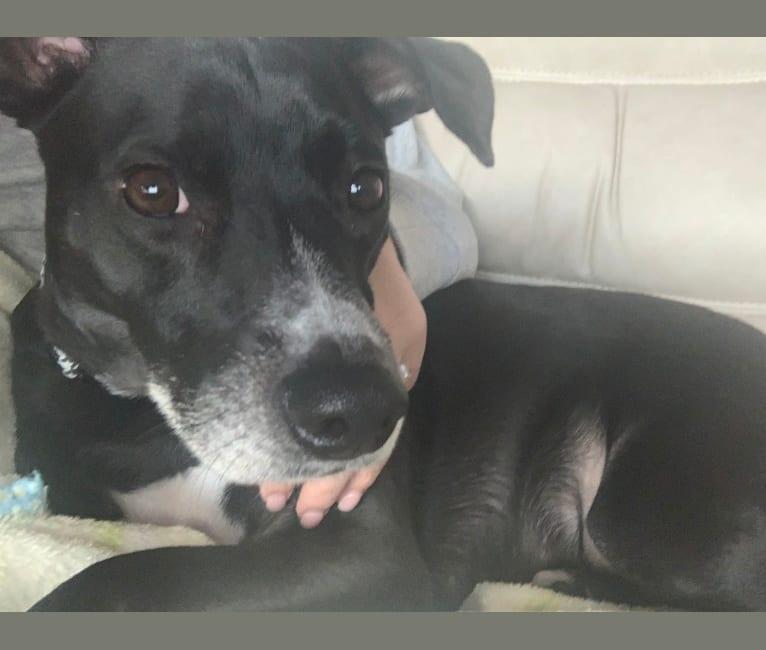 Photo of Luna, an American Village Dog  in Puerto Rico