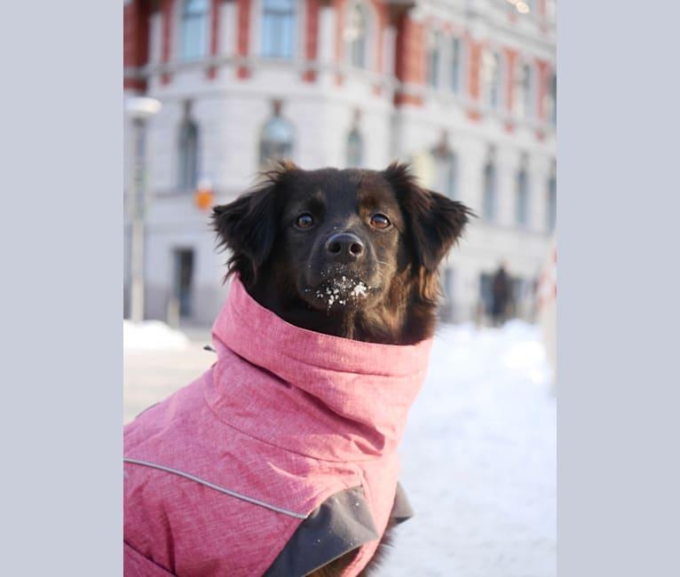 Photo of Lulu, an Eastern European Village Dog and Pekingese mix in Bosnia ja Hertsegovina