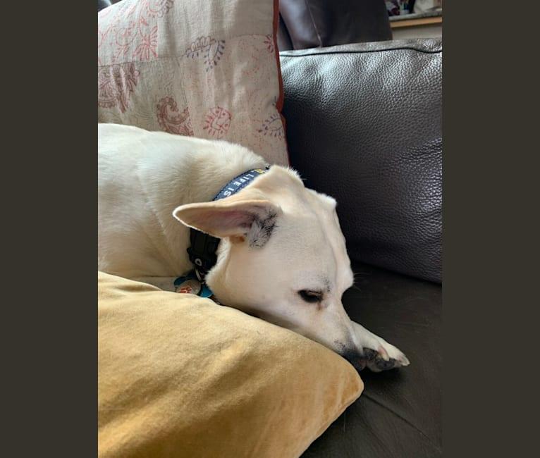 Photo of Kinko, a Miniature Schnauzer, Poodle (Small), Chihuahua, Pomeranian, and Mixed mix