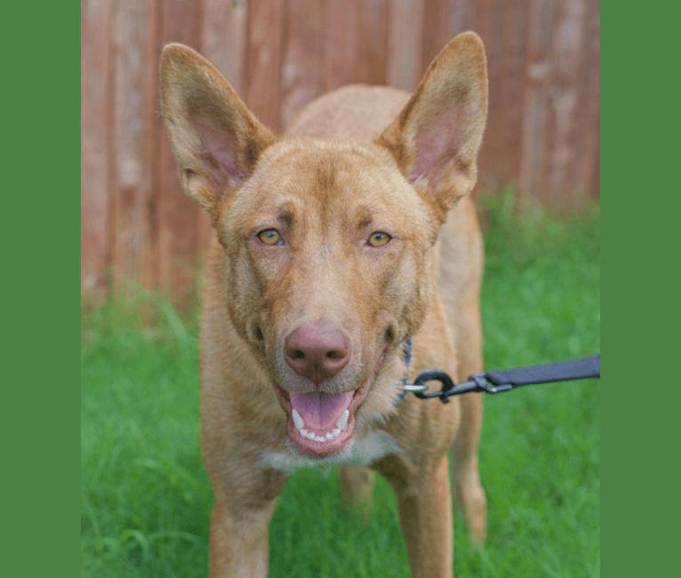 Photo of Scooby, a   in Fort Worth, Texas, USA