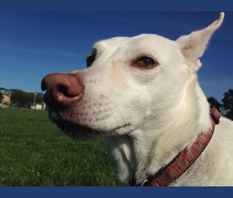 Photo of Arizona Horchata Miel de Abeja, an American Village Dog