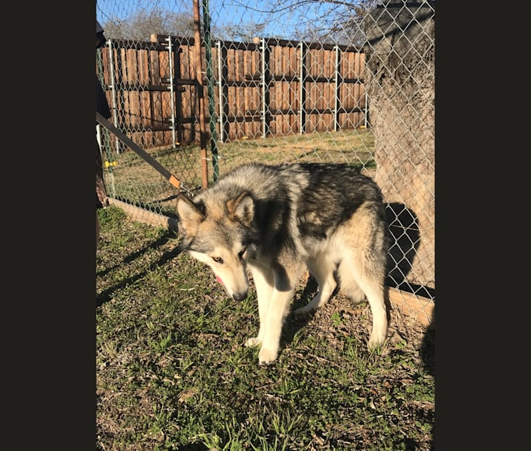 Photo of Suka, a   in Texas, USA