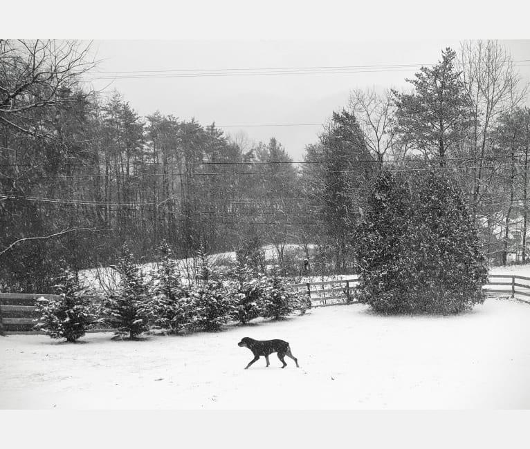 Photo of Agnes, a Rottweiler  in Covington, Virginia, USA