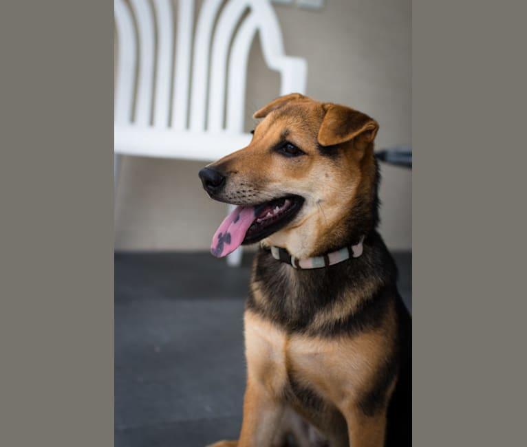 Photo of Biscuit Pearl Bolt Hu, a Hong Kong Village Dog  in Hong Kong