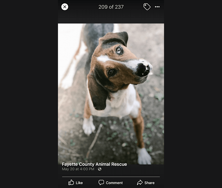 Photo of Rio!, a Treeing Walker Coonhound  in Fayette County, TN, USA