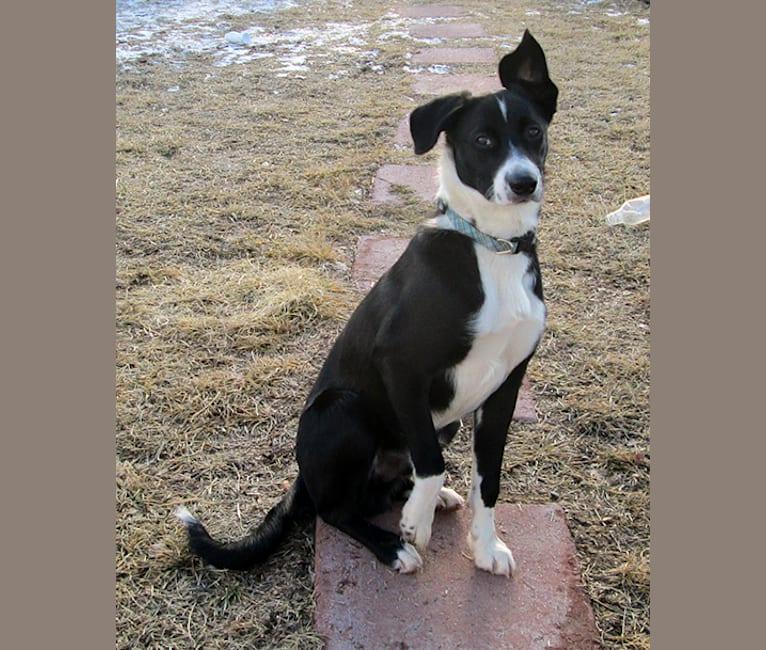 Photo of Jolt, a McNab  in Marana, AZ, USA