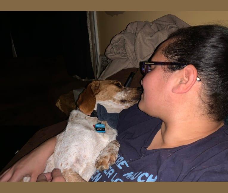 Photo of Heath, a Beagle, Australian Cattle Dog, Treeing Walker Coonhound, and Dachshund mix in Norfolk, Virginia, USA