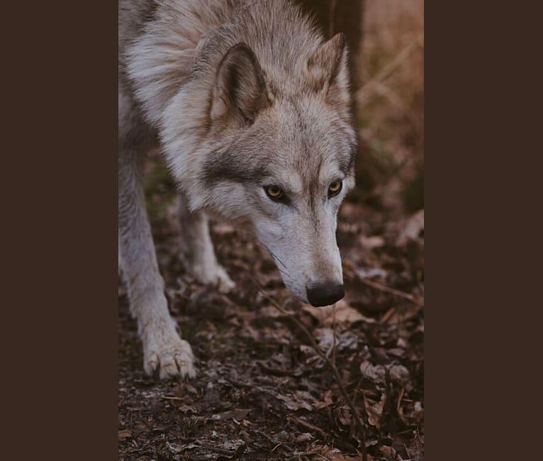 Photo of Tikaani,