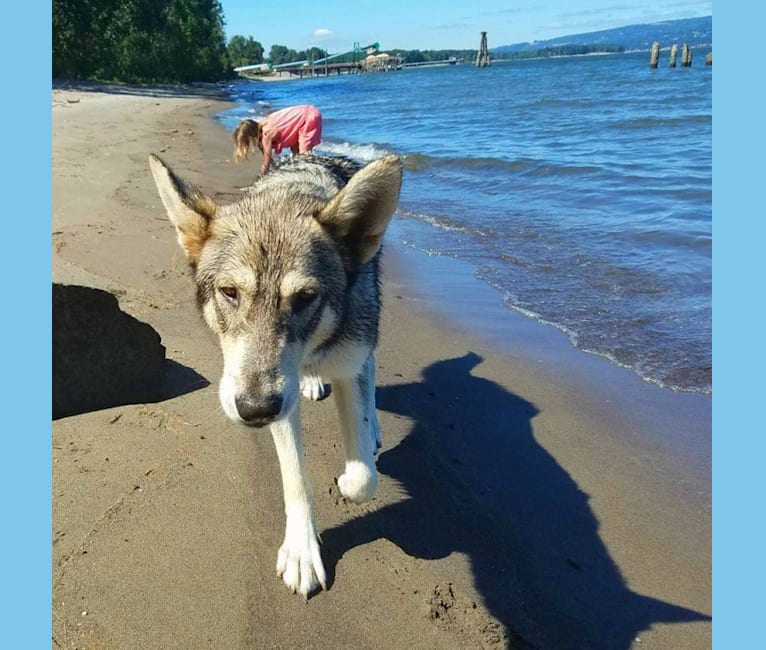 Photo of Ayla, a   in Oregon, USA