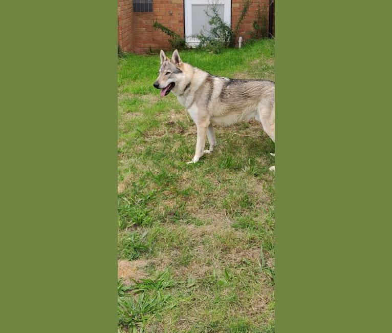 Photo of Xerxes, a   in Scotland, UK