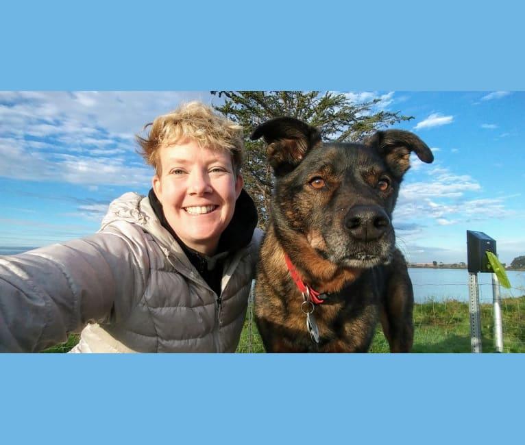Photo of Zeus, an Australian Cattle Dog, German Shorthaired Pointer, Rottweiler, German Shepherd Dog, and Mixed mix in Lake Ozark, Missouri, USA