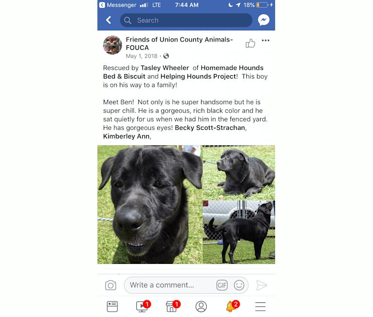 Photo of Ben, a Bulldog, Neapolitan Mastiff, Rottweiler, and Mixed mix in Jacksonville, Florida, USA