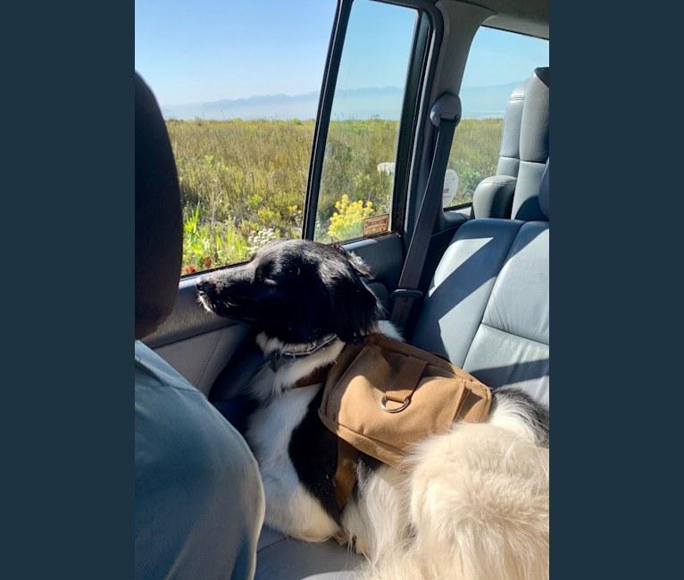 Photo of Jax, a Chow Chow, Cocker Spaniel, Border Collie, German Shepherd Dog, and Mixed mix in Birmingham, Alabama, USA