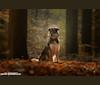 Photo of Flóki, an Eastern European Village Dog  in Russia