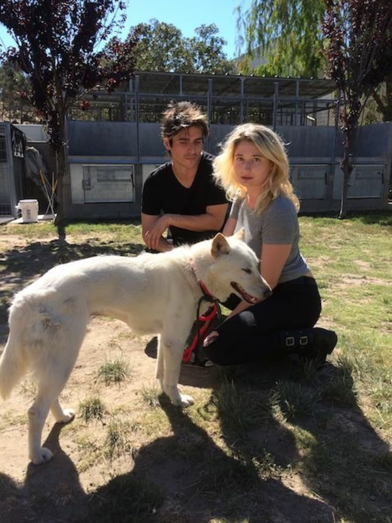 Photo of Char, a Jindo  in Los Angeles, California, USA