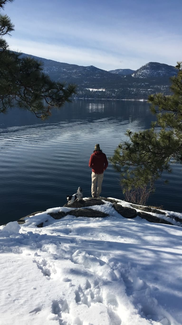 Photo of McGregor, a Shih Tzu  in Lumby, British Columbia, Canada