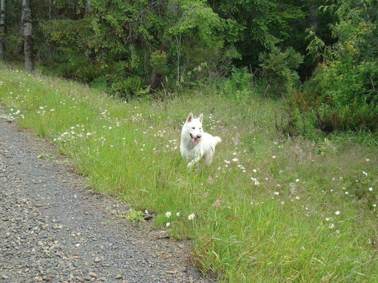 Photo of Malachi, a   in Oregon, USA