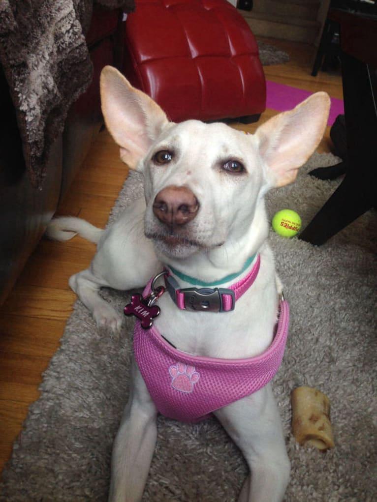 Photo of Kim, an African Village Dog