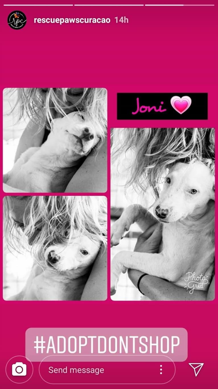 Photo of Shakira, an American Village Dog  in Curaçao, Curaçao