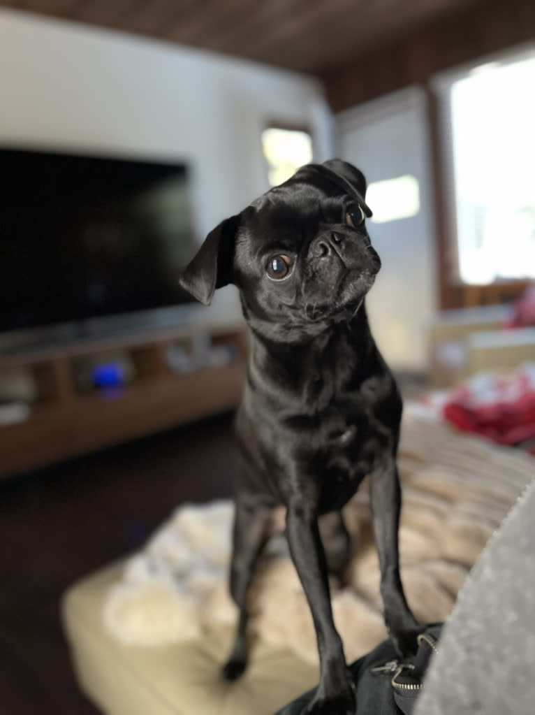 Photo of Nori, a Pug  in South Korea