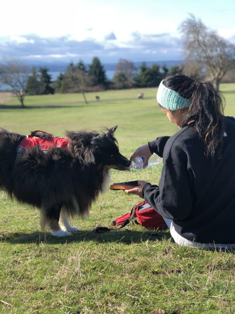 Photo of Rocco, an Australian Shepherd Group