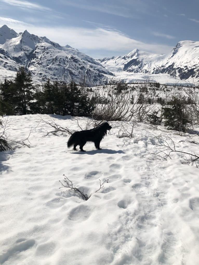 Photo of Beauregard, a Cocker Spaniel, Mountain Cur, Alaskan Malamute, Border Collie, and Mixed mix in Delta Junction, AK, USA