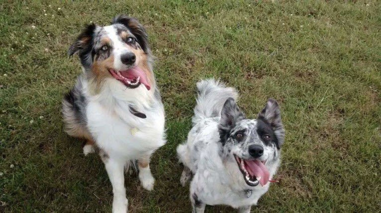 Photo of Mysticals, a Border Collie  in null