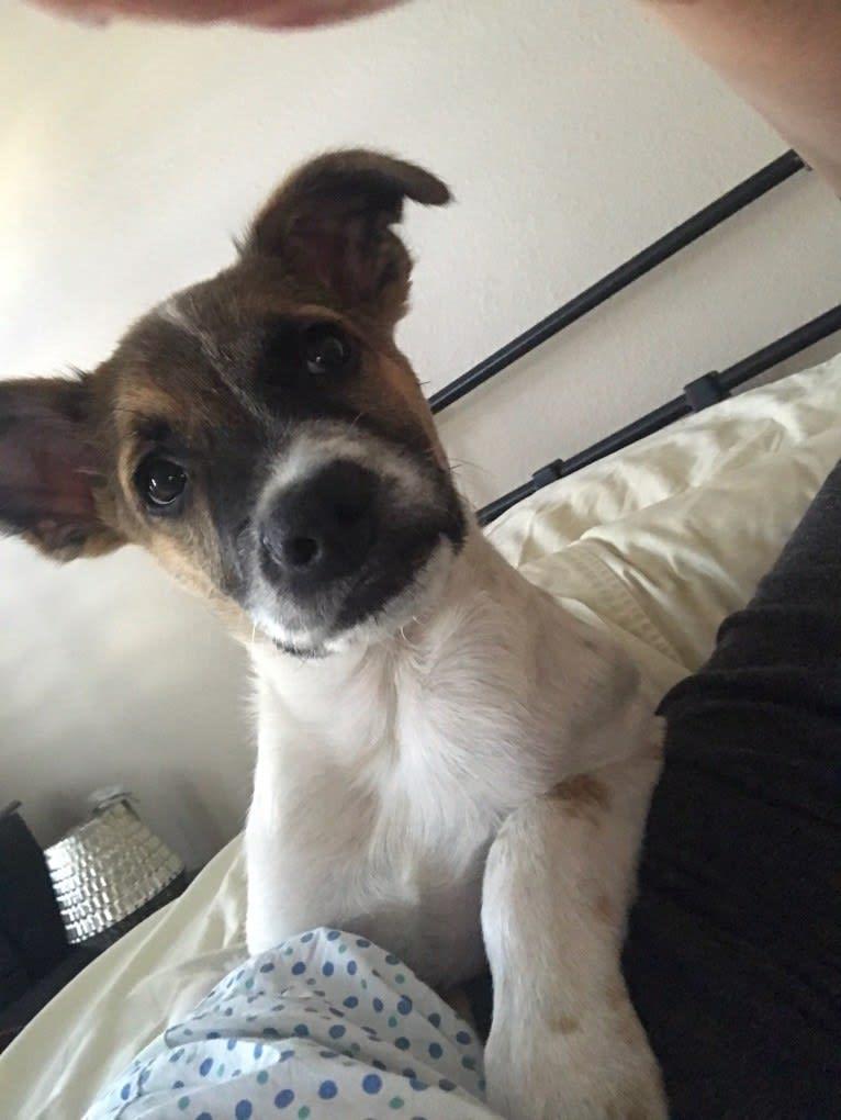 Photo of Teddy, a German Shepherd Dog, Doberman Pinscher, and Mixed mix