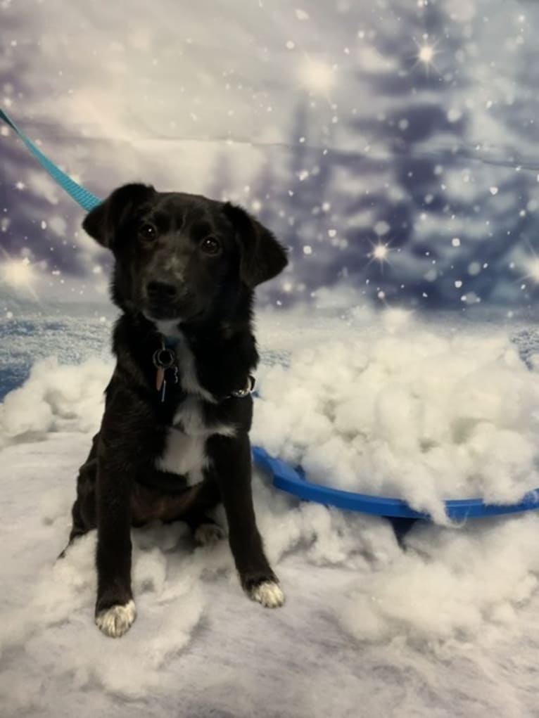 Photo of Lily, a Labrador Retriever, Beagle, German Shepherd Dog, Chow Chow, and Miniature Pinscher mix in Mississippi, USA