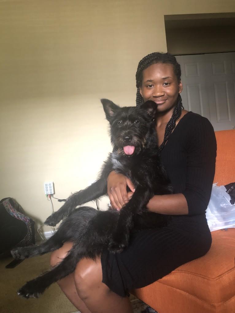Photo of Minnie, a Miniature Schnauzer, Labrador Retriever, Australian Shepherd, American Pit Bull Terrier, German Shepherd Dog, Chow Chow, and Mixed mix in Jackson, Mississippi, USA