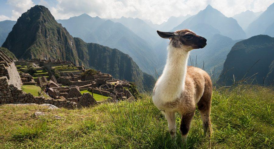 Machu Picchu trip