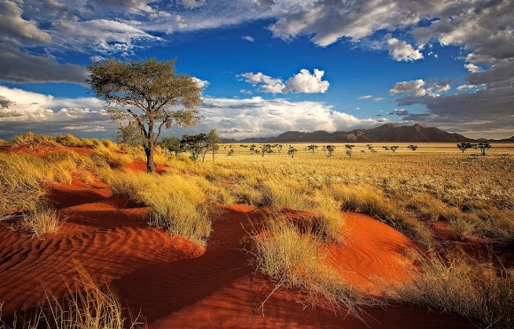 Red dunes of Namibia in a private nature reserve in Namibia