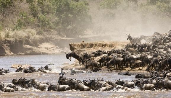 Die Great Migration