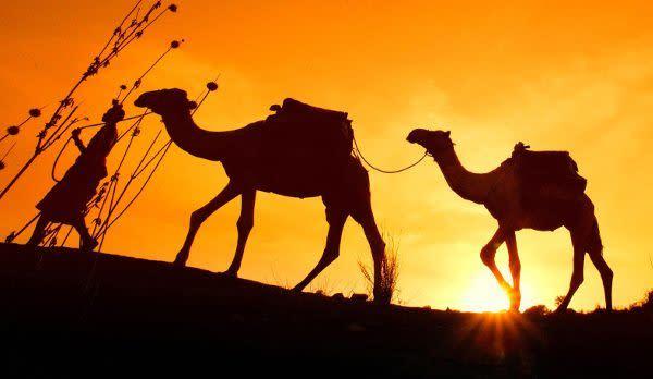Camel race in Northern Kenya