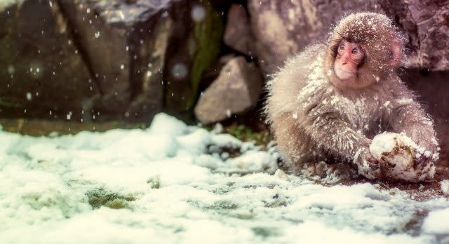 Enchanting Travels - Japan Tours - Nagano Trips - Snow Monkey