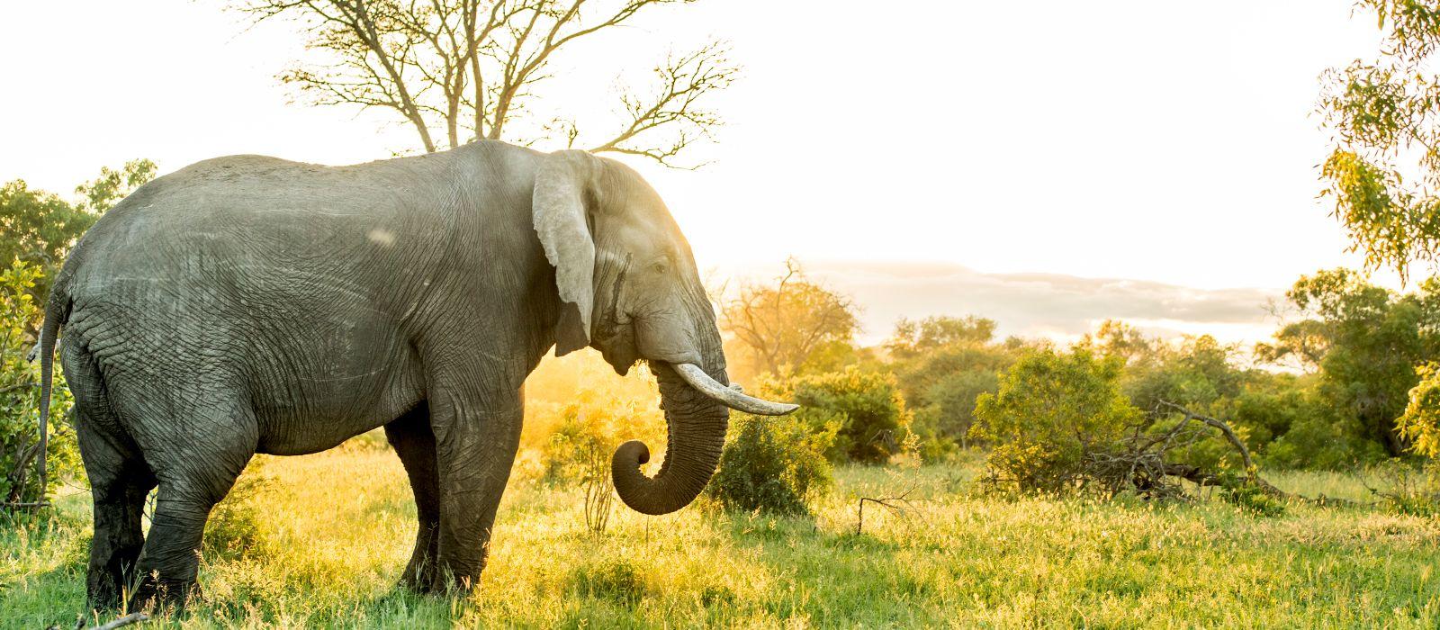 Cape Town, Big Five and Indian Ocean Dreams Tour Trip 5