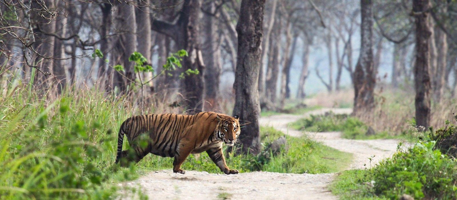 Oberoi Exklusiv: Royales Rajasthan und Safari Abenteuer Urlaub 2