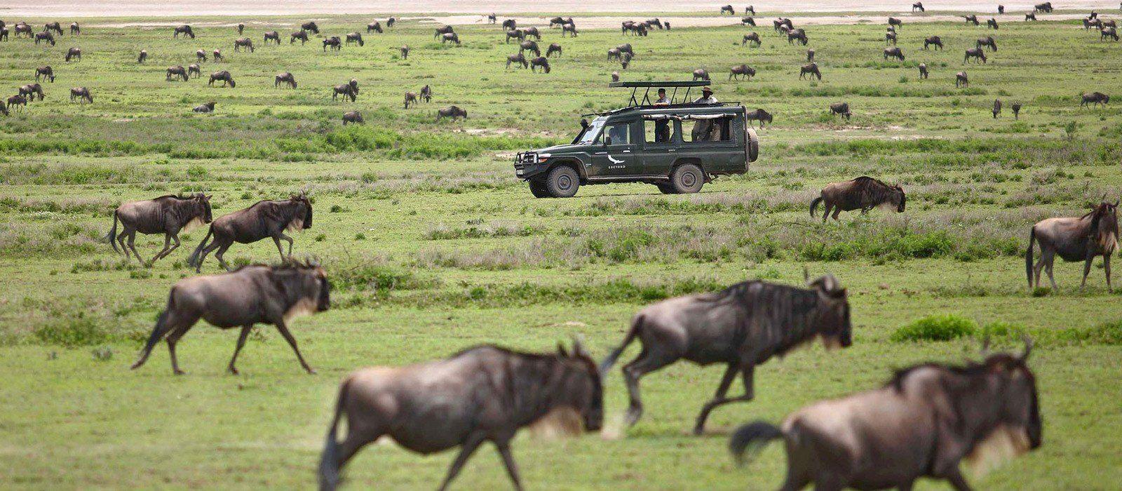 Tanzania Tours & Trips