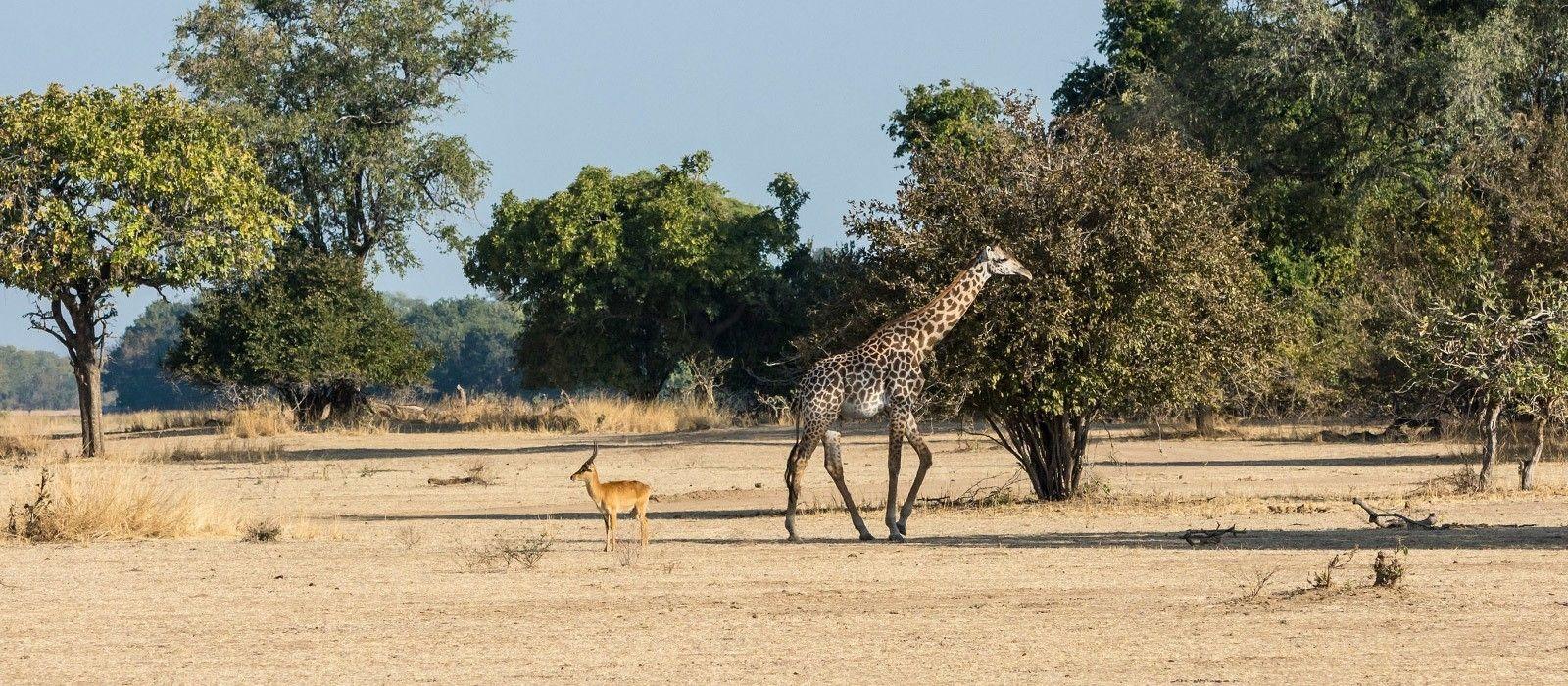 Sambia und Malawi: Viktoriafälle, Safari und See der Sterne Urlaub 6