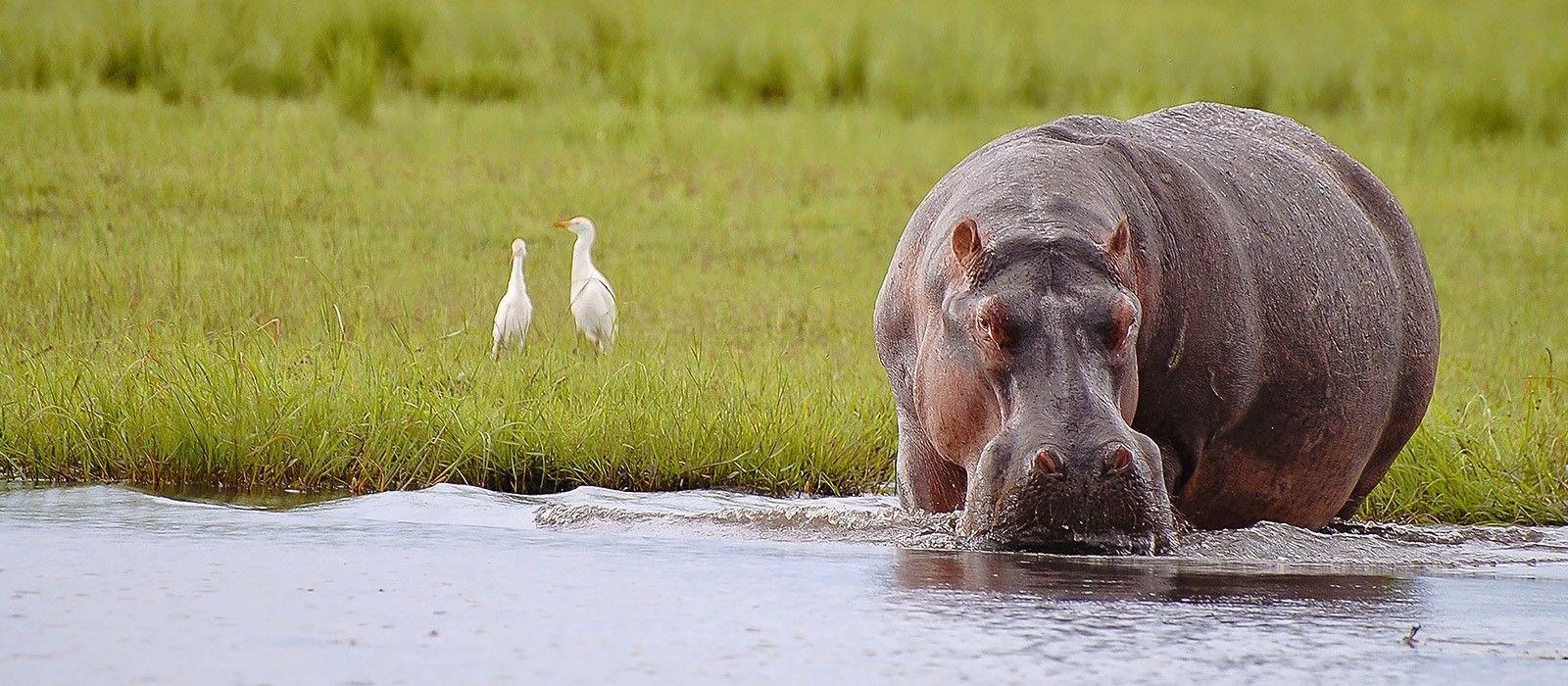 Reiseziel Savuti & Linyanti Botswana