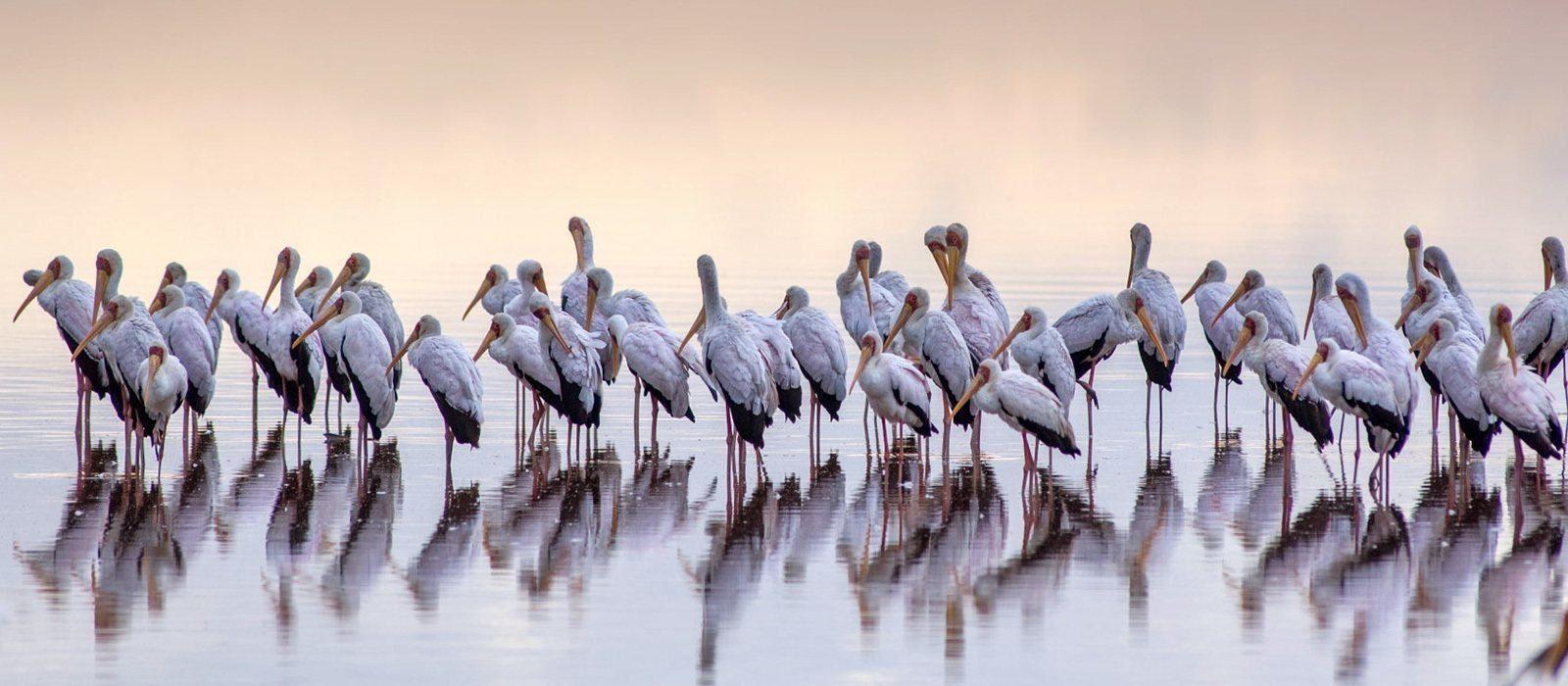 Destination Lake Elementaita Kenya