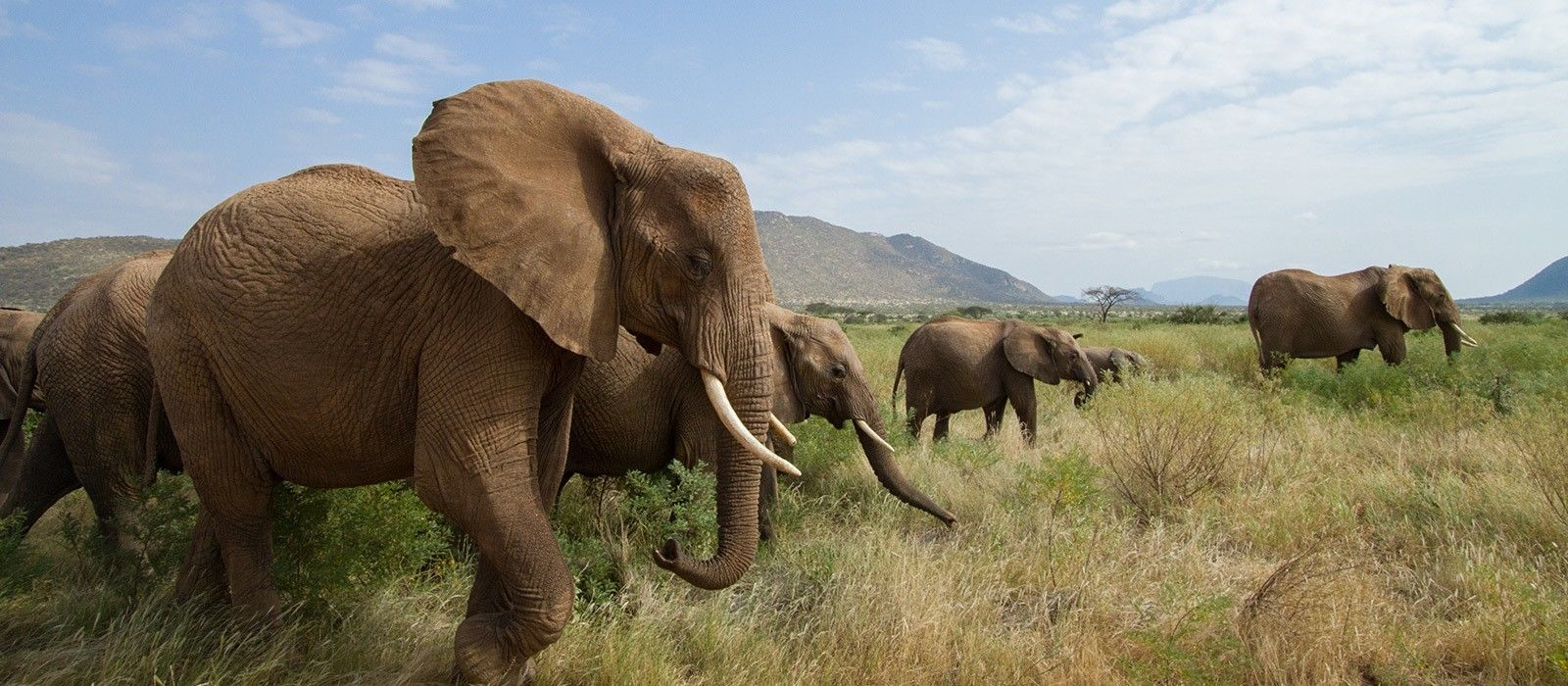 Classic Kenya: Samburu, Masai Mara and Beach Break Tour Trip 4