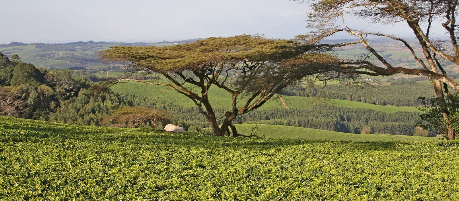 Malawi Rundreise: Natur, Safari und Lake Malawi Urlaub 2