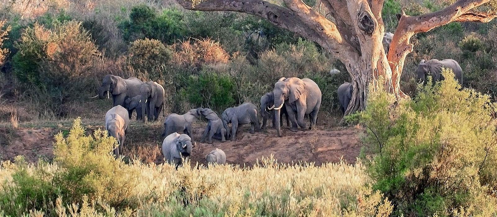 Südafrikas Wildnis entdecken – West Kap und Krüger Nationalpark Urlaub 5