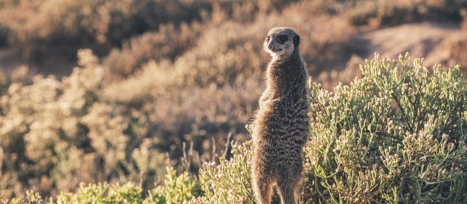 Südafrika & Mauritius: Wilde Tiere, weites Land & tropische Träume Urlaub 4
