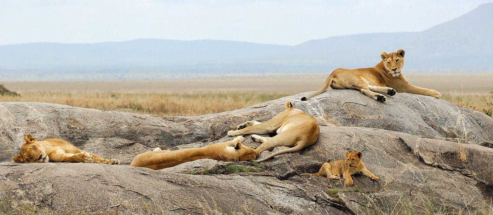 Lakeside Luxury and Wildlife in Tanzania Tour Trip 3