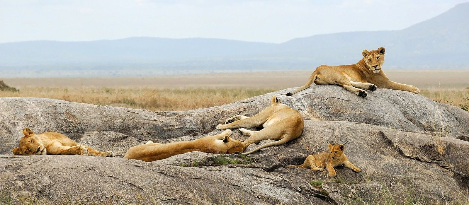 Lakeside Luxury, Wilderness and Wildlife in Tanzania Tour Trip 2