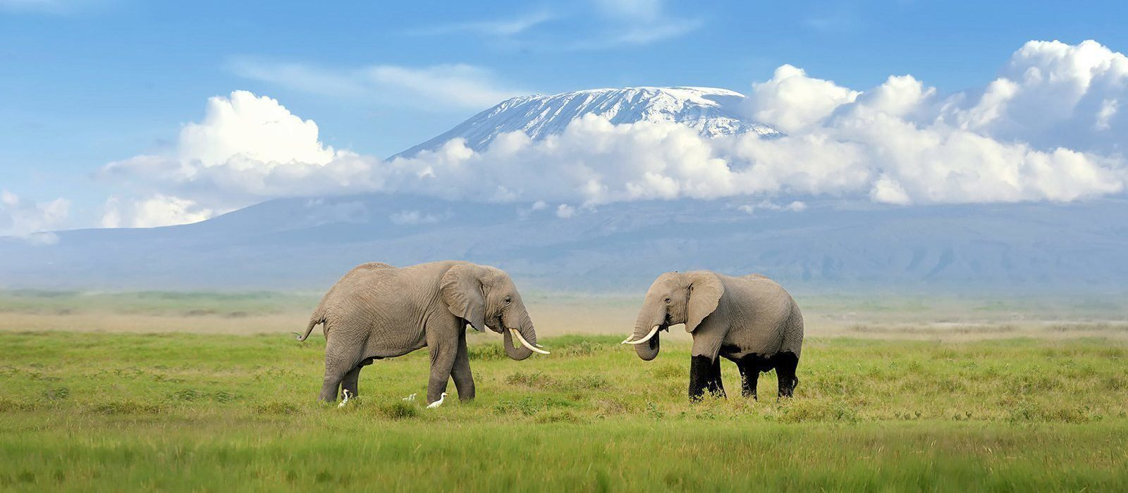Destination Mt. Kilimanjaro Tanzania